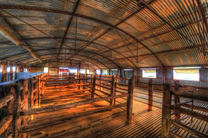Bucklow Station - Woolshed - NSW SQ (PB5D 00 2631)