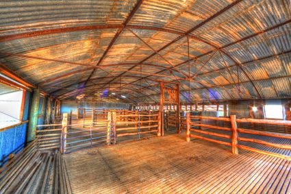 Bucklow Station - Woolshed - NSW SQ (PB5D 00 2637)