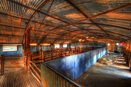 Bucklow Station - Woolshed - NSW SQ (PB5D 00 2649)