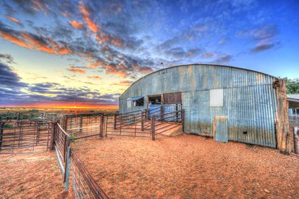 Bucklow Station - Woolshed - NSW SQ (PB5D 00 2676)