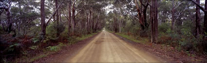 Bush Road - Crowdy Bay NP - NSW (PB003727)