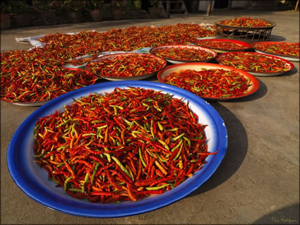 Chillies SQ (PBH3 00 13826)