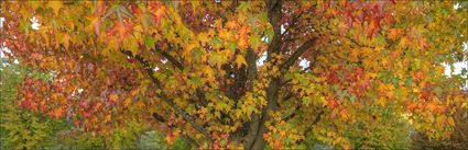 Colours of Autumn - Stanley - VIC (PBH4 00 13496)