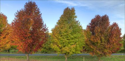 Colours of Autumn - Stanley - VIC T (PBH4 00 13487)