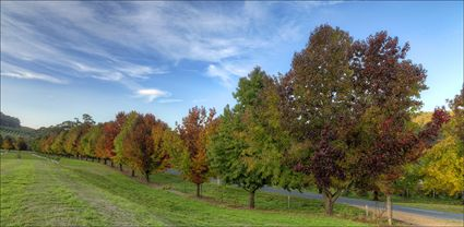 Colours of Autumn - Stanley - VIC T (PBH4 00 13490)