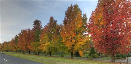 Colours of Autumn - Stanley - VIC T (PBH4 00 13511)