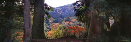 Autumn Colours - Japan (PB00 6136)