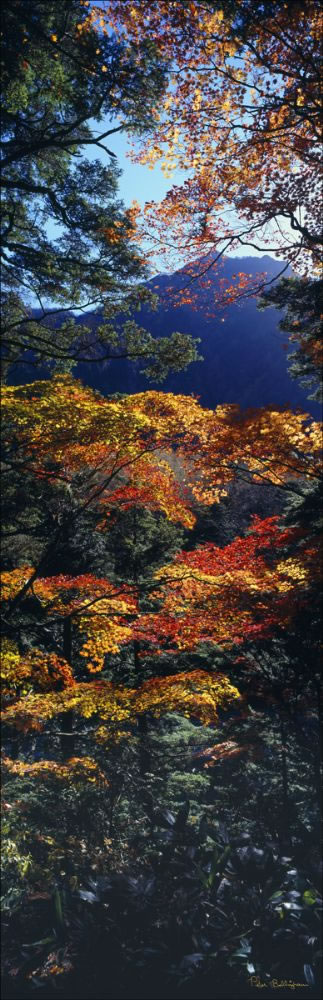 Autumn Colours - Japan (PB00 6157)
