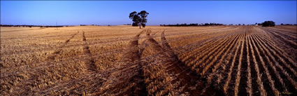 Tracks in the Field - Burra - SA  (PB00 3972)