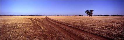 Tracks in the field 2 - Burra - SA (PB00 3973)
