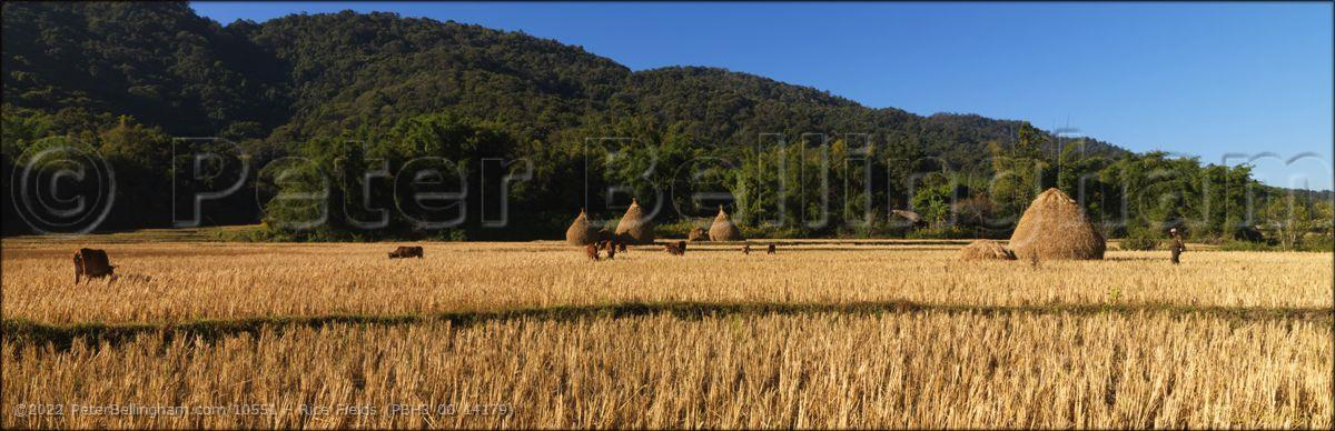 Peter Bellingham Photography Rice Fields (PBH3 00 14179)