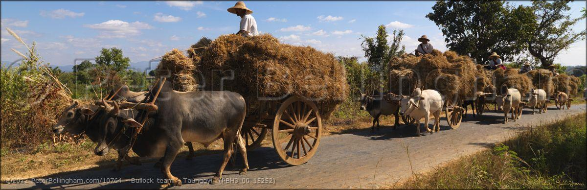 Peter Bellingham Photography Bullock team - Taunggyi  (PBH3 00 15252)