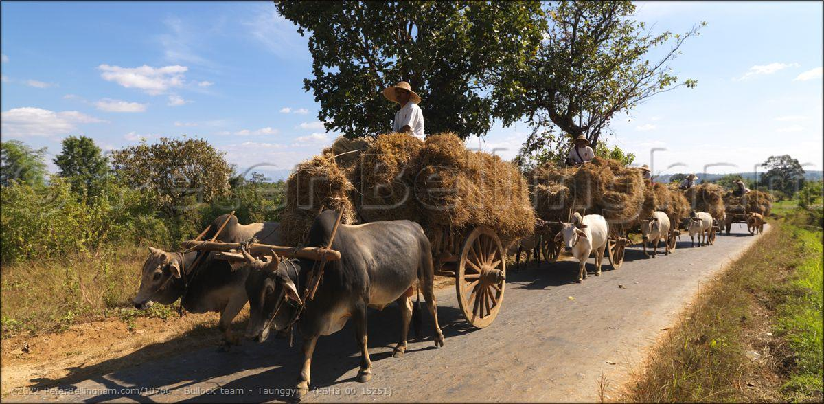 Peter Bellingham Photography Bullock team - Taunggyi T (PBH3 00 15251)