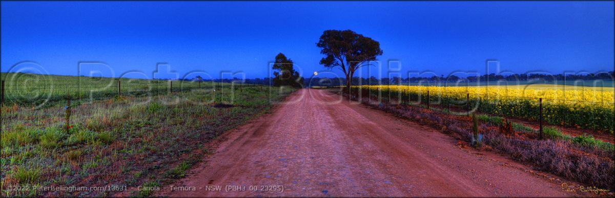Peter Bellingham Photography Canola - Temora - NSW (PBH3 00 23295)