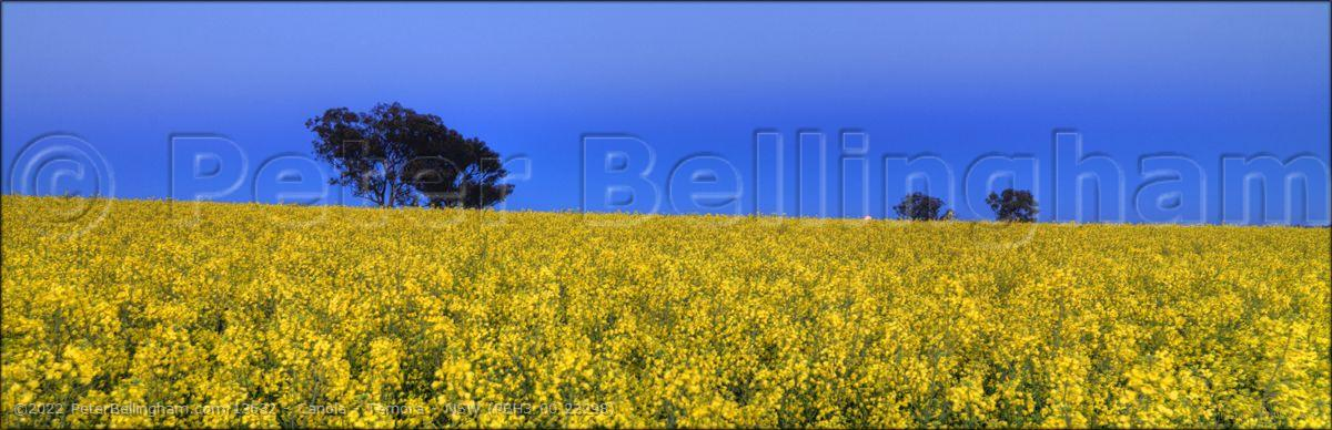 Peter Bellingham Photography Canola - Temora - NSW (PBH3 00 23298)