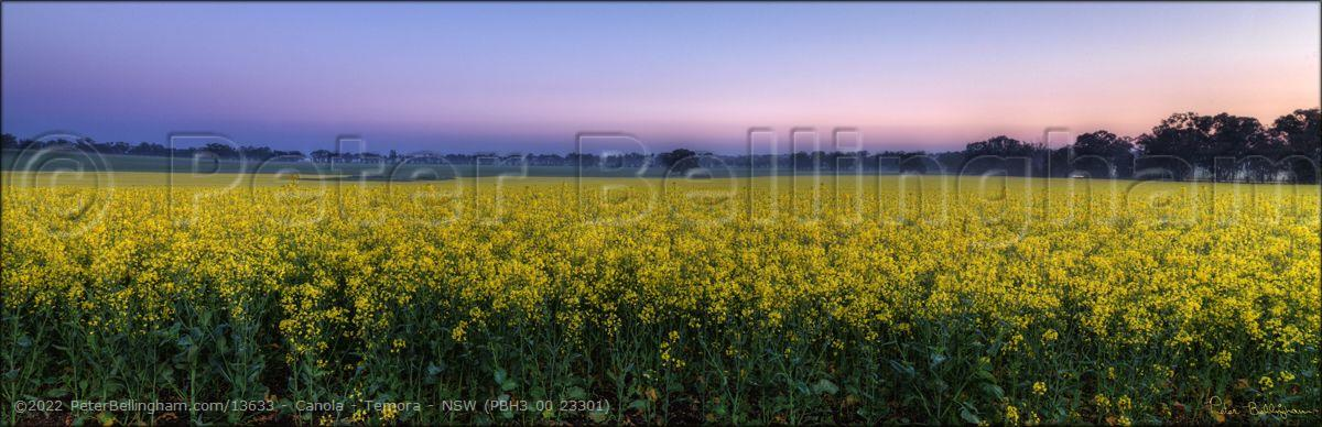 Peter Bellingham Photography Canola - Temora - NSW (PBH3 00 23301)