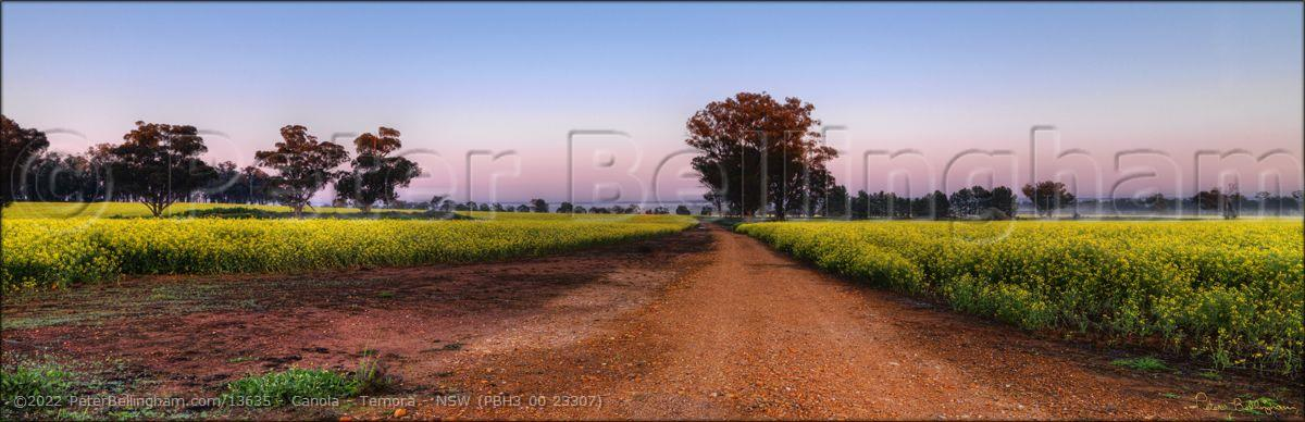 Peter Bellingham Photography Canola - Temora - NSW (PBH3 00 23307)