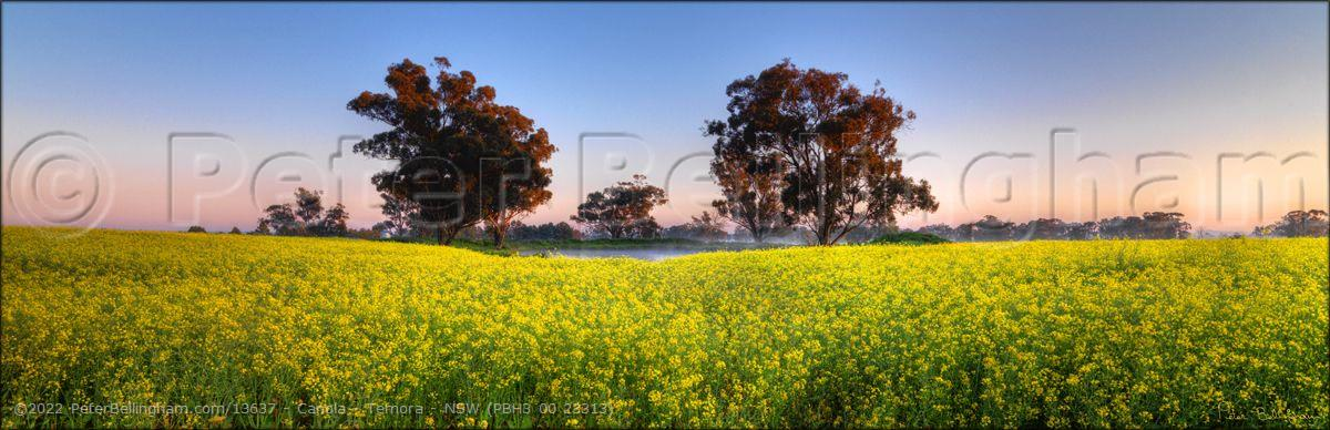 Peter Bellingham Photography Canola - Temora - NSW (PBH3 00 23313)