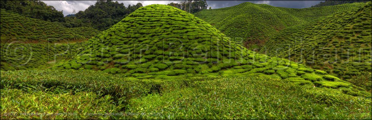 Peter Bellingham Photography Cameron Highlands (PBH3 00 23525)