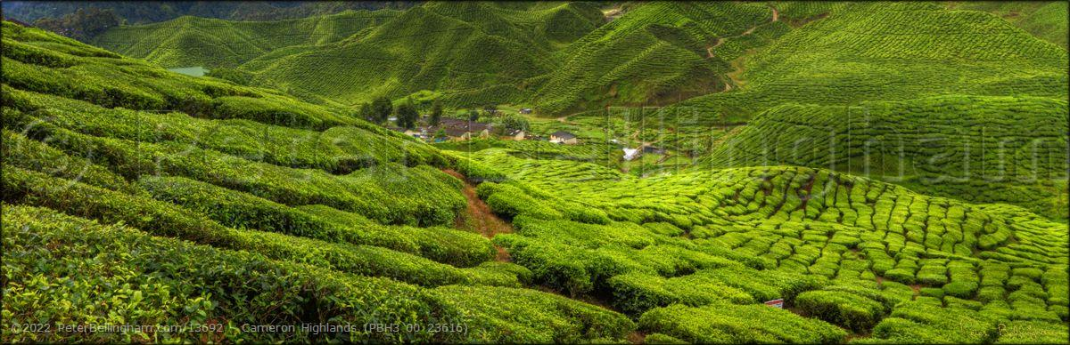 Peter Bellingham Photography Cameron Highlands (PBH3 00 23616)