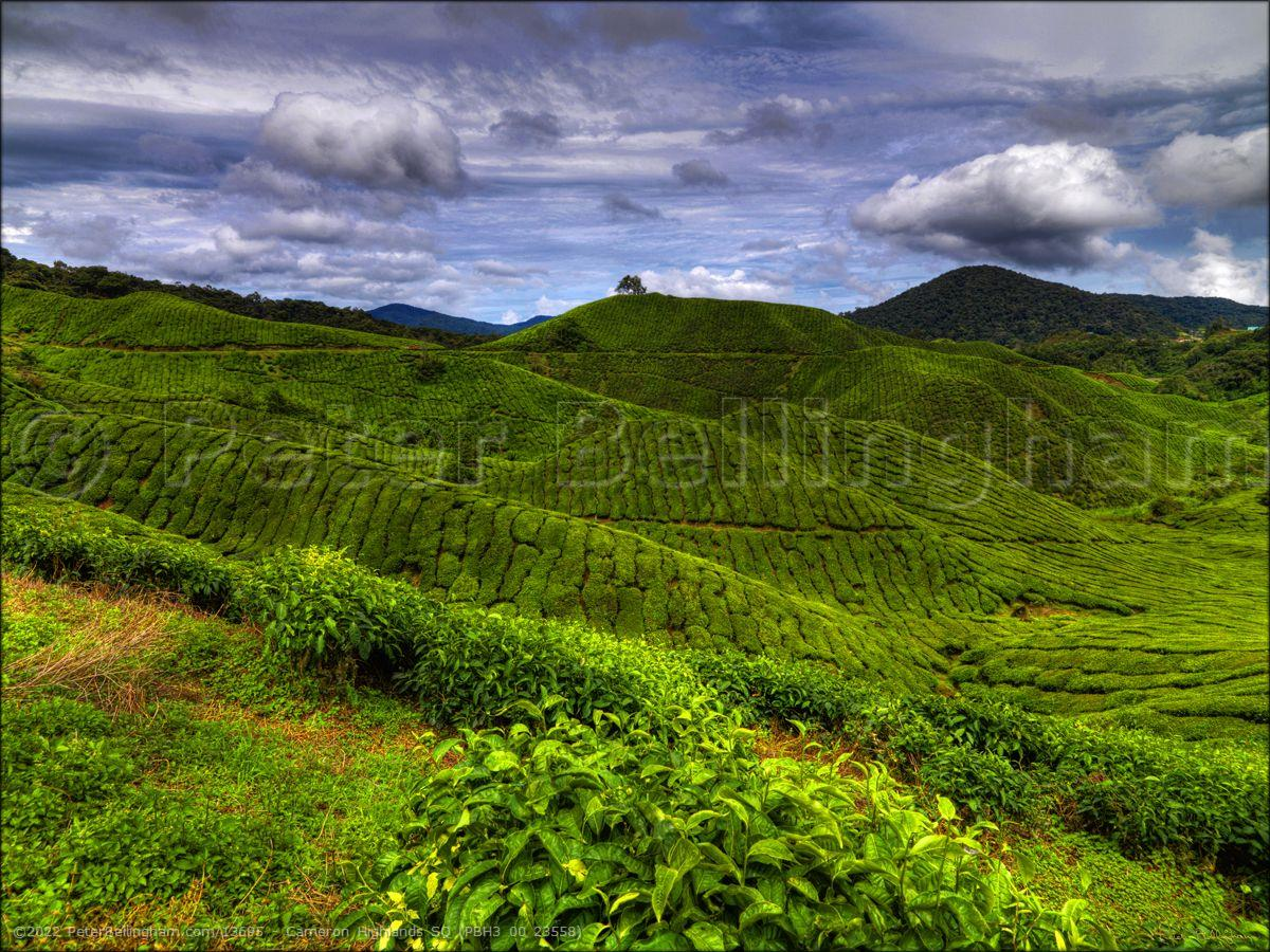 Peter Bellingham Photography Cameron Highlands SQ (PBH3 00 23558)