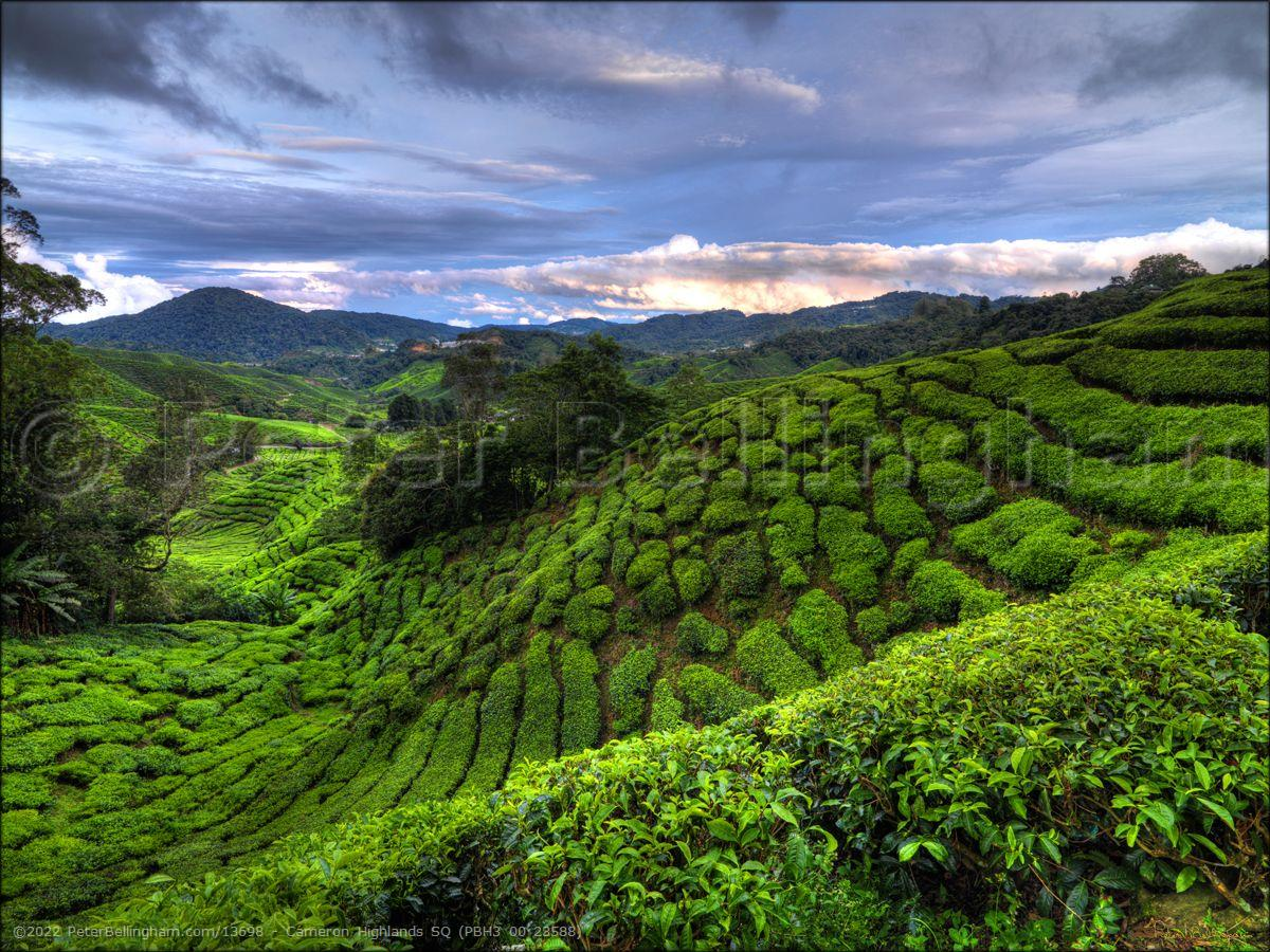Peter Bellingham Photography Cameron Highlands SQ (PBH3 00 23588)