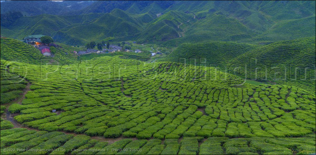 Peter Bellingham Photography Cameron Highlands T (PBH3 00 23552)
