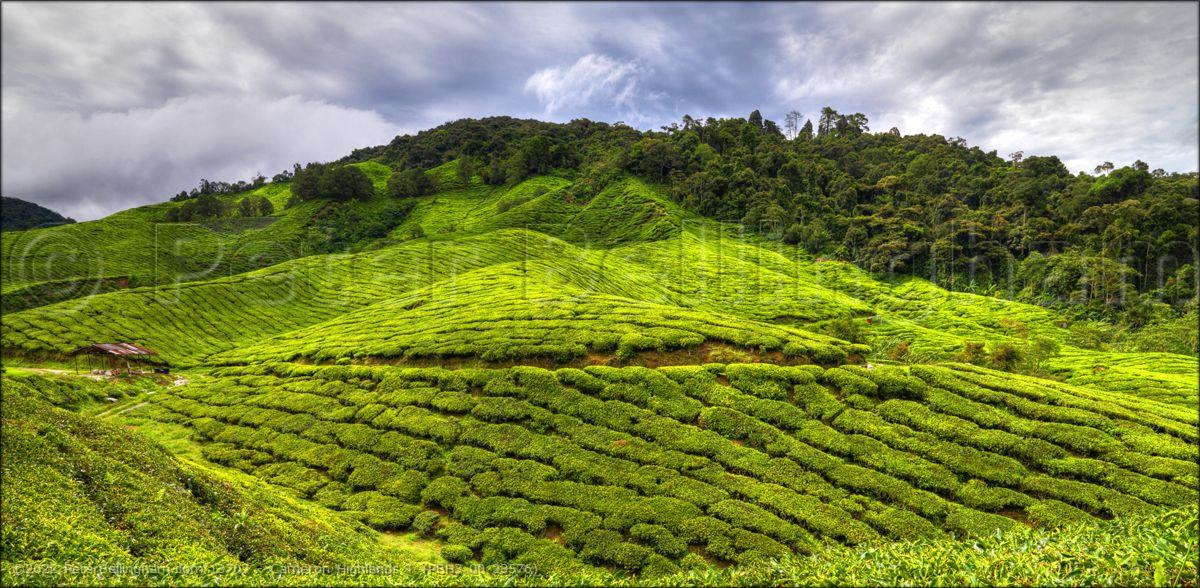 Peter Bellingham Photography Cameron Highlands T (PBH3 00 23576)