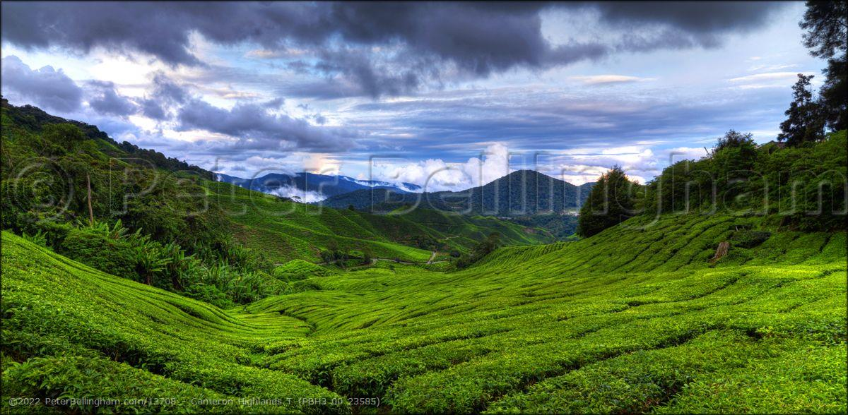 Peter Bellingham Photography Cameron Highlands T (PBH3 00 23585)