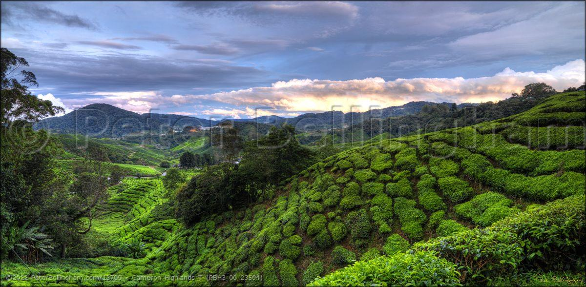 Peter Bellingham Photography Cameron Highlands T (PBH3 00 23594)