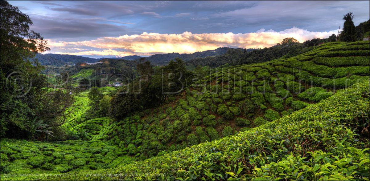 Peter Bellingham Photography Cameron Highlands T (PBH3 00 23600)