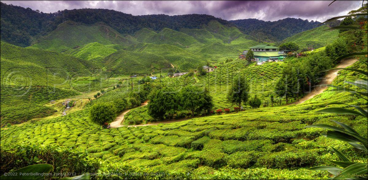 Peter Bellingham Photography Cameron Highlands T (PBH3 00 23510)