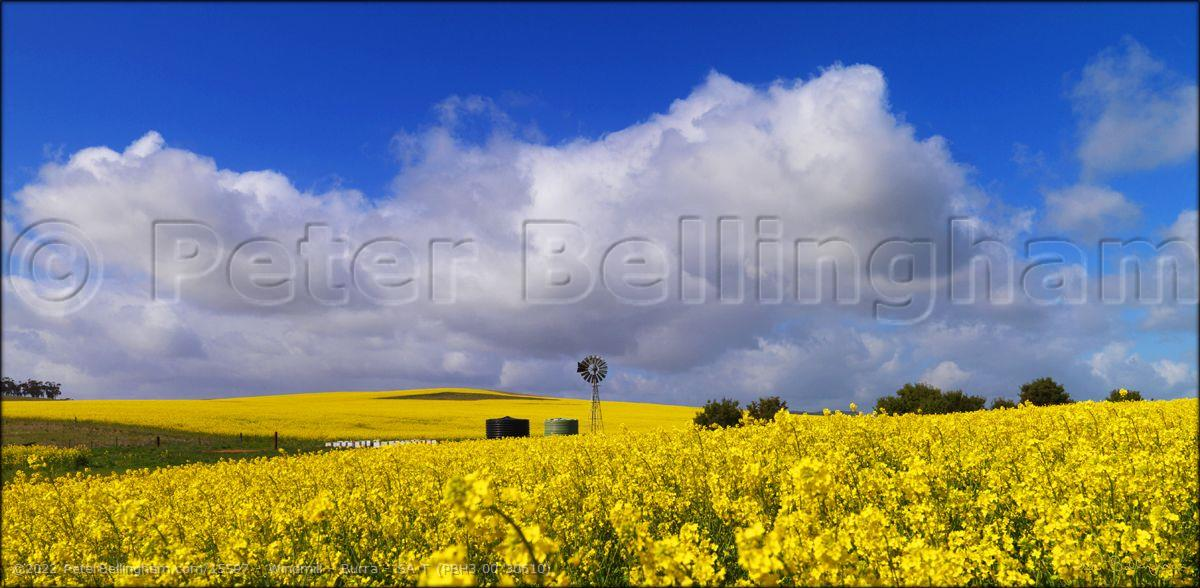 Peter Bellingham Photography Windmill - Burra - SA T (PBH3 00 30610)