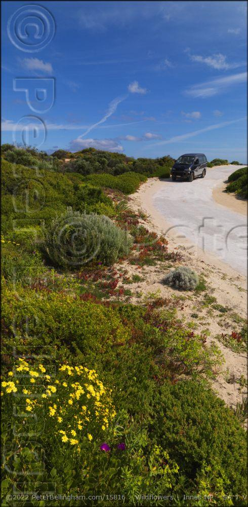 Peter Bellingham Photography Wildflowers - Innes NP - SA T V (PBH3 00 30256)