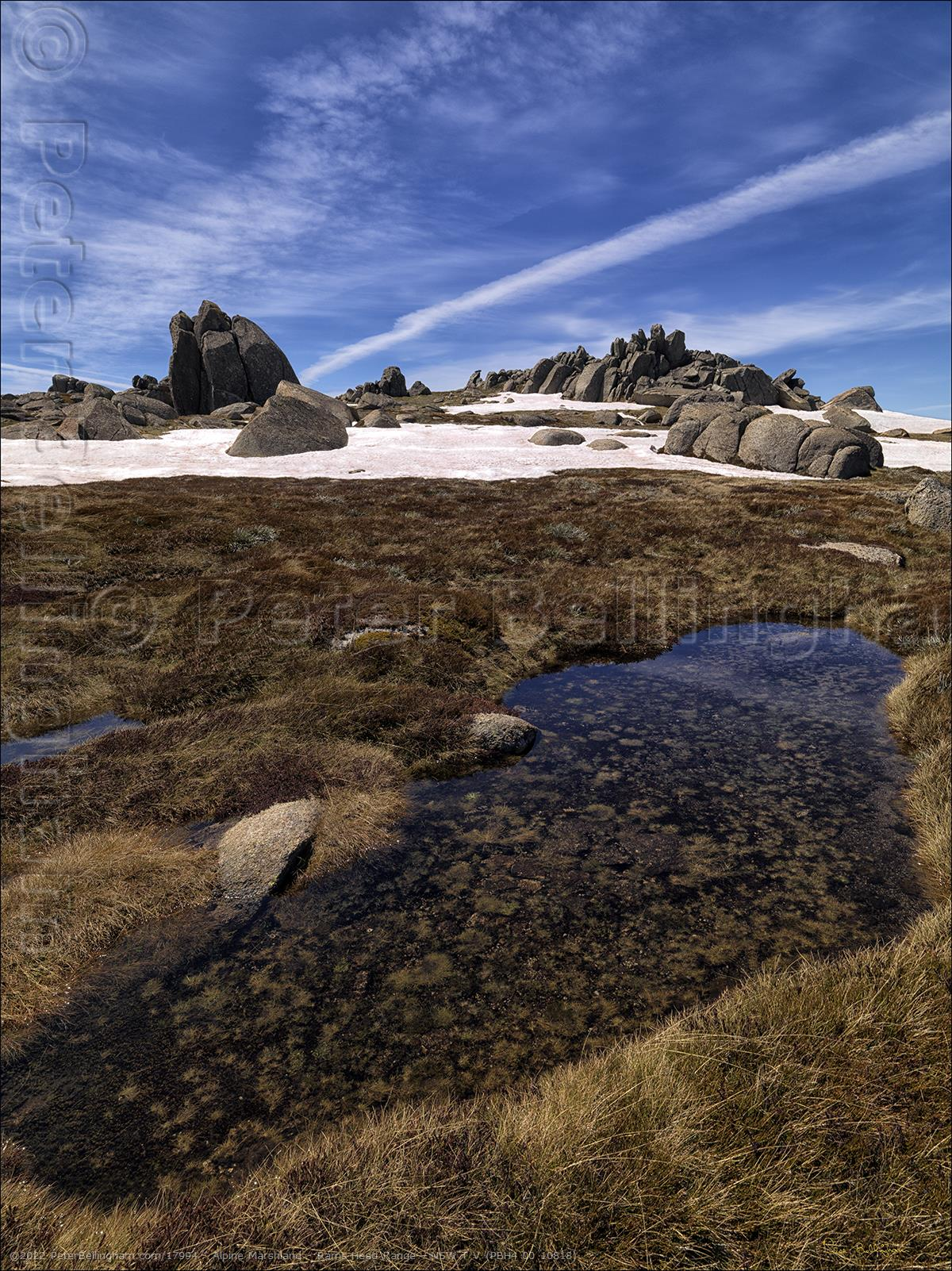 Peter Bellingham Photography Alpine Marshland - Rams Head Range - NSW T V (PBH4 00 10818)