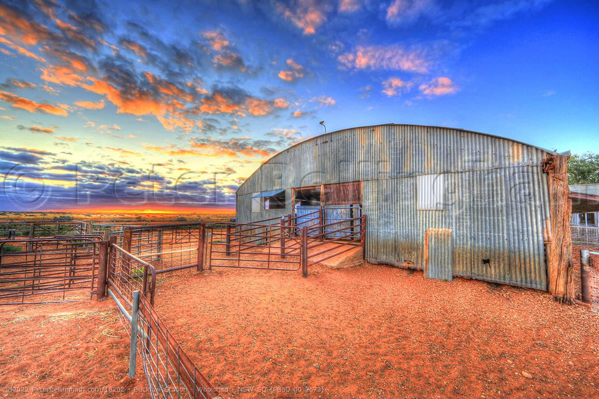 Peter Bellingham Photography Bucklow Station - Woolshed - NSW SQ (PB5D 00 2673)