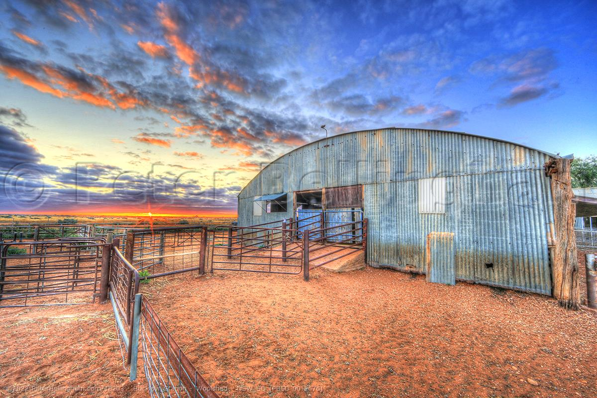 Peter Bellingham Photography Bucklow Station - Woolshed - NSW SQ (PB5D 00 2676)