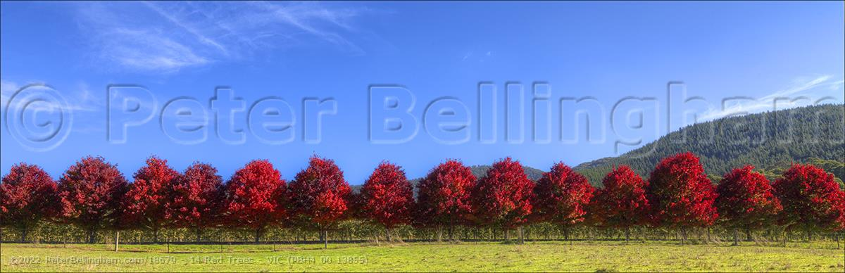 Peter Bellingham Photography 14 Red Trees - VIC (PBH4 00 13855)
