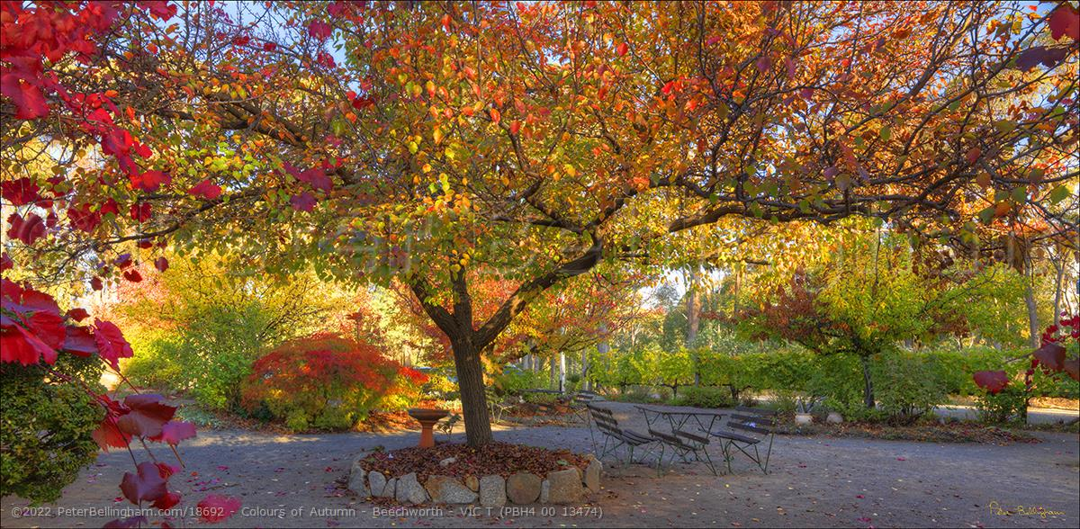 Peter Bellingham Photography Colours of Autumn - Beechworth - VIC T (PBH4 00 13474)