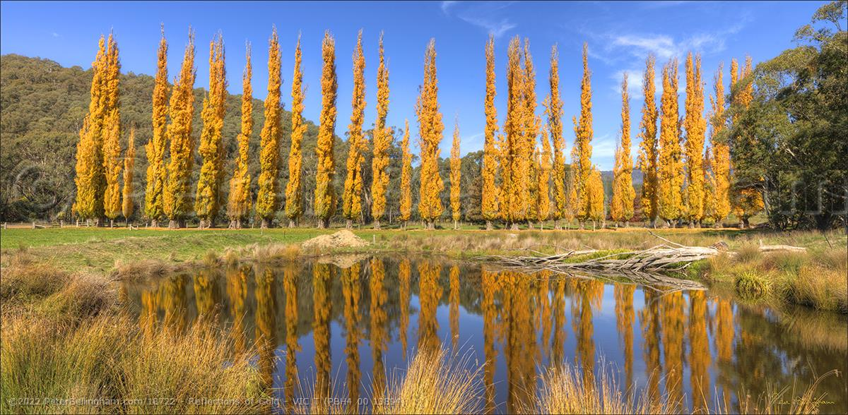 Peter Bellingham Photography Reflections of Gold - VIC T (PBH4 00 13894)