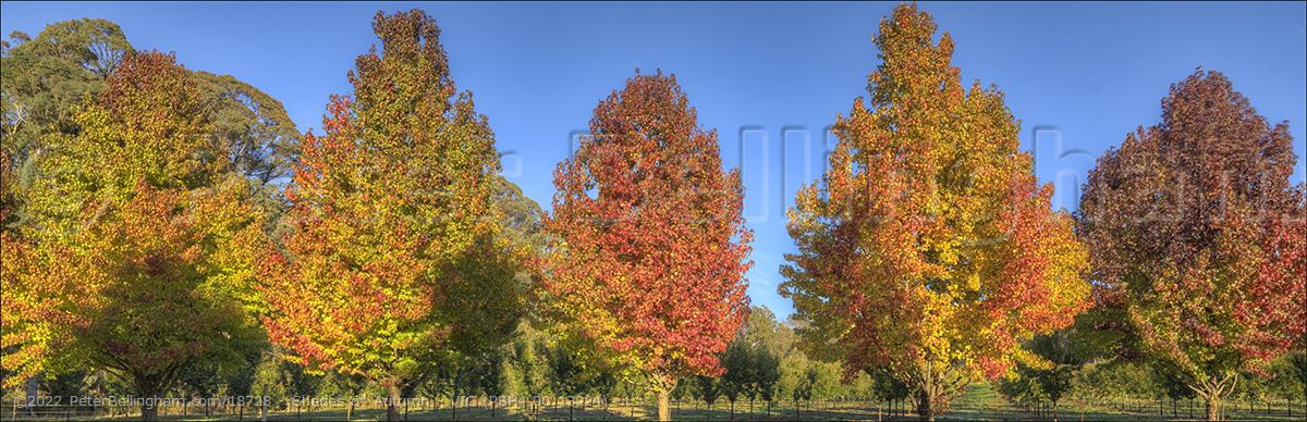 Peter Bellingham Photography Shades of Autumn - VIC (PBH4 00 13224)