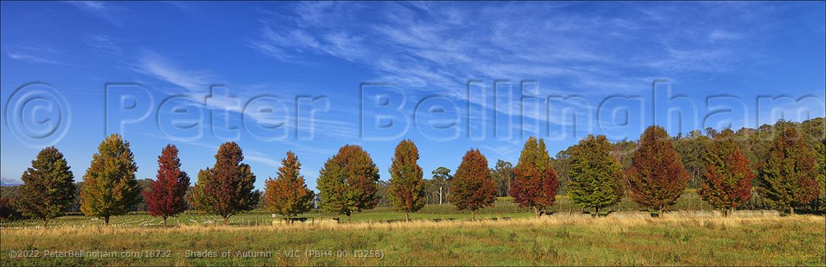 Peter Bellingham Photography Shades of Autumn - VIC (PBH4 00 13258)