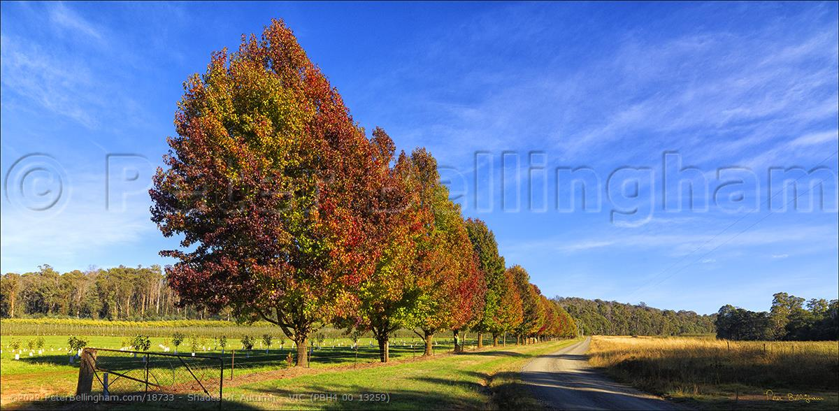 Peter Bellingham Photography Shades of Autumn - VIC (PBH4 00 13259)