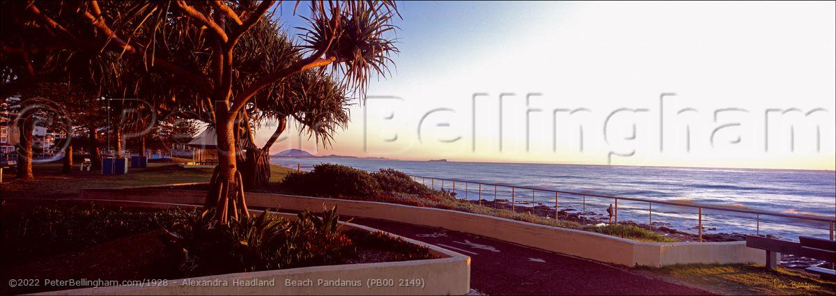 Peter Bellingham Photography Alexandra Headland  Beach Pandanus (PB00 2149)