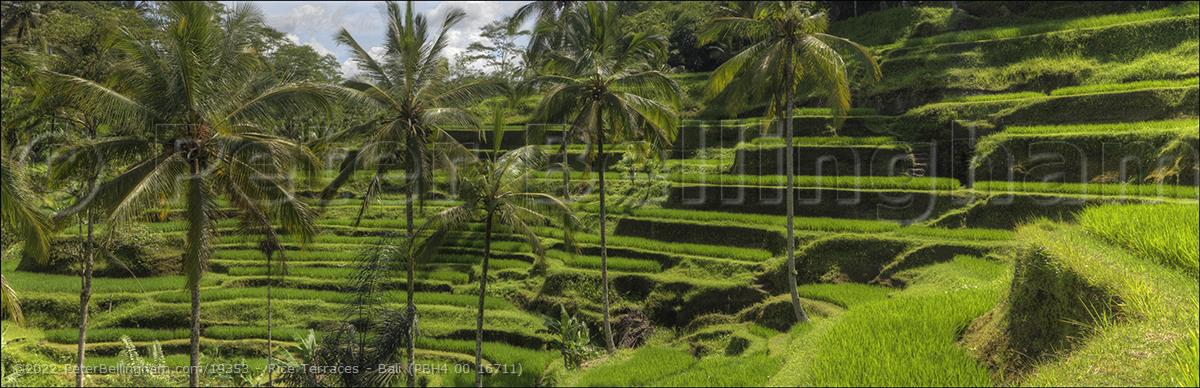 Peter Bellingham Photography Rice Terraces - Bali (PBH4 00 16711)