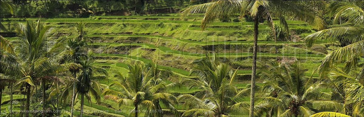 Peter Bellingham Photography Rice Terraces - Bali H (PBH4 00 16578)