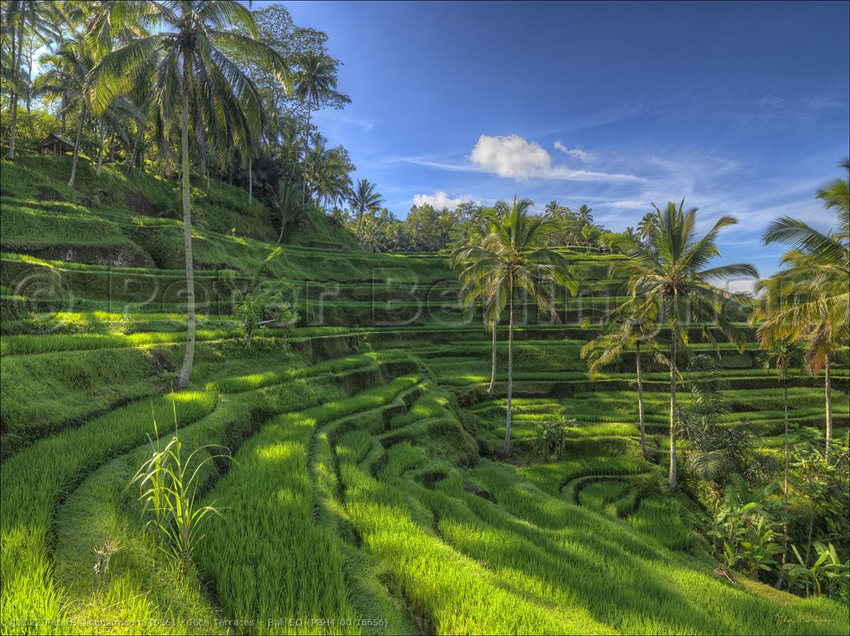 Peter Bellingham Photography Rice Terraces - Bali SQ (PBH4 00 16656)