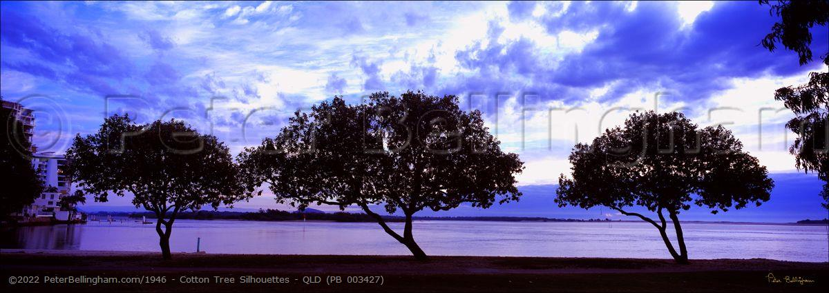 Peter Bellingham Photography Cotton Tree Silhouettes - QLD (PB 003427)