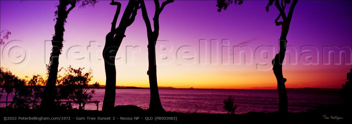 Peter Bellingham Photography Gum Tree Sunset 2 - Noosa NP - QLD (PB003083)
