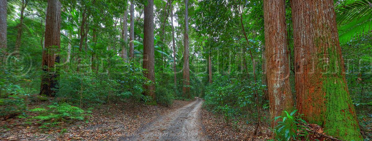 Peter Bellingham Photography 4WD Track - Fraser Island - QLD (PB5D 00 51A1868)